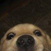 An Actual Dog